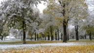 MS TD Snow falling on colorful autumn leaves on tree in park /  Landshut, Bavaria, Germany
