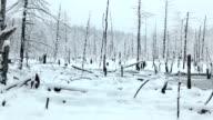 Snow Falling on Marsh