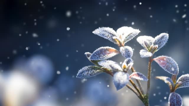Schnee Landschaft