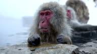 VDO HD: Scimmia di neve