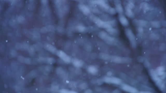 Snow softly falls at dusk