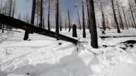 Snowboarder Backside 180 Off Log