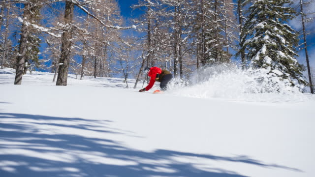 Snowboarding through a forest on freshly fallen snow