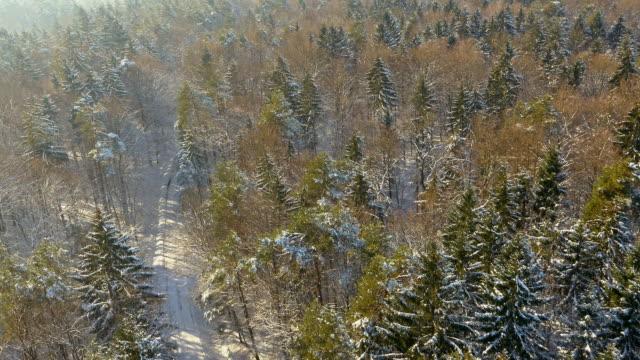 LUCHTFOTO Snowbound landweg door een bos