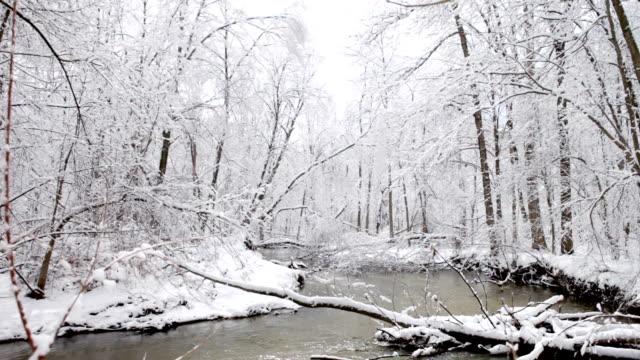 Coperta di neve albero in Michigan Woods