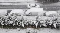 Snowfalls From My Window