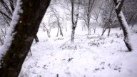 HD SUPER SLOW MO: Snowflakes Covering Forest Slope