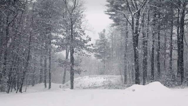 Schneesturm in Wald egal