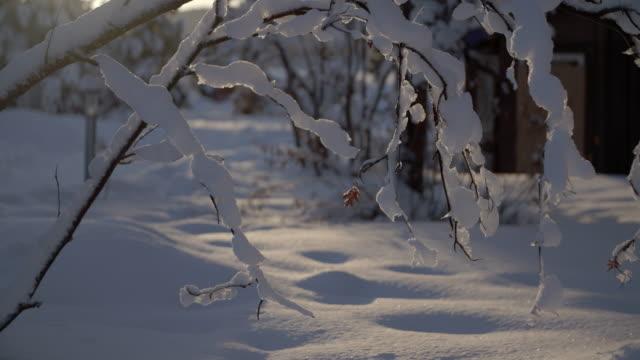 Snowy Branches in the Sunlight / Jukkasjarvi, Sweden