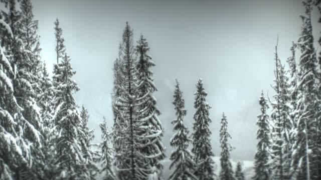 Besneeuwde forest