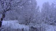 Snowy Szene
