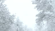 Snowy Trees Surrounding The Road