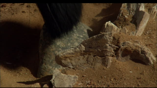 A soft brush sweeps sand away from an artefact in the sand. Available in HD.