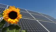 Solar Panel /sunflower in the wind