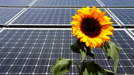 Solar Panels wit sunflower