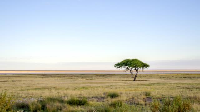 WS Solitary Tree In African Savannah