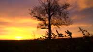 SLO MO regime albero nel crepuscolo