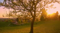 Solitary tree in the meadow at sunset