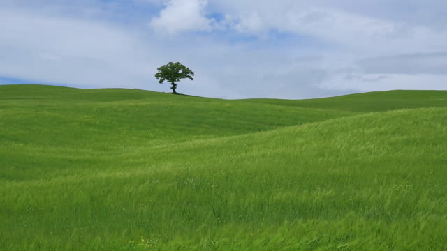 Solo green tree