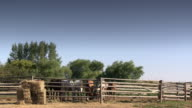 Some horse in a ranch witha rough wooden fence