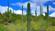 Sonoran desert time lapse
