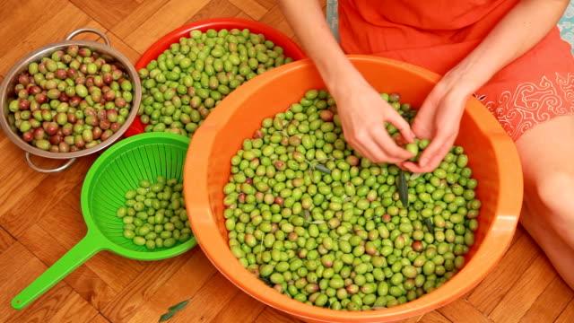 Sorting olive harvest