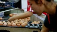Sorting process in eggs chicken farm
