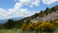 Spain Pyrenees view with yellow flowers and rock face
