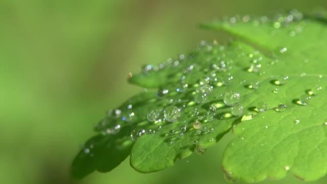 Sparkling Dew on fresh green leaf