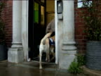 A specially trained assistance dog helps his disabled owner with daily tasks UK Dec 2011