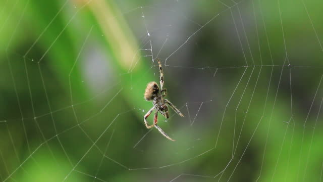 Spider grooming.