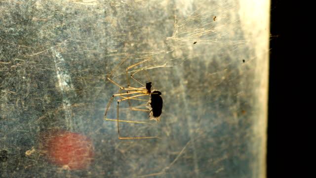 Spinne Jagd Opfer auf alten Glasfenster mit Sonnenlicht