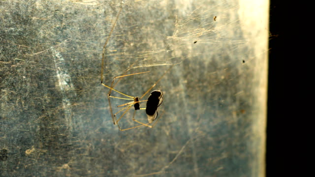 Spider Hunting Victim with Sunlight on Window Glass