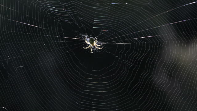 Spider Moving In Its Web