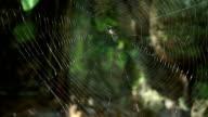Spider on spiderweb.