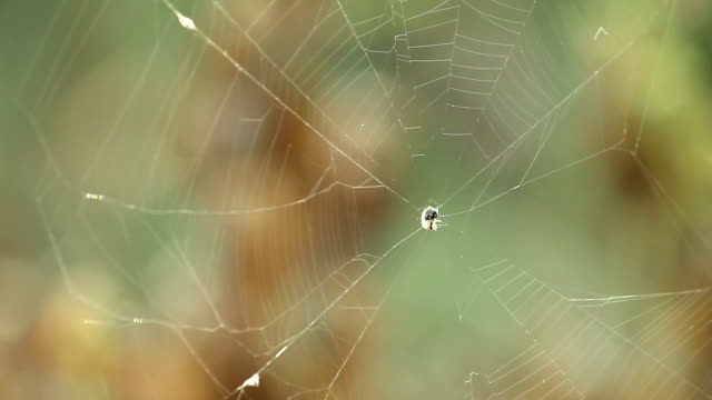 Spider on spiderweb.