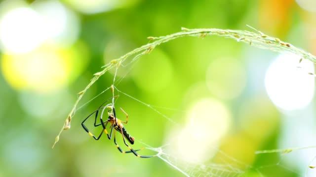 Spin in een bos op web.