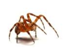 Spider PAL
