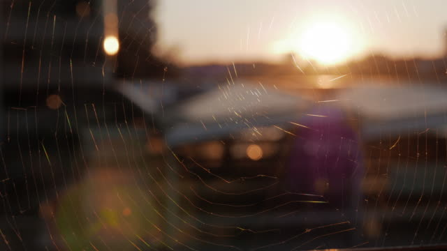 Spider Web at Sunset in the City