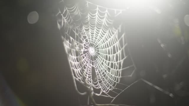 Spider web shimmering in early morning mist