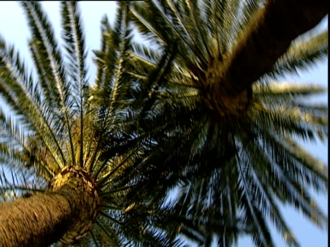 Spin around under two palm trees creating drunken effect