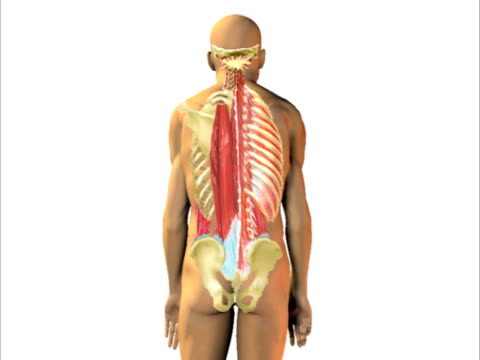 Spinal muscle tension, bad posture.