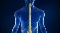 Wirbelsäule Anatomie mit Intervertebral Ermäßigung