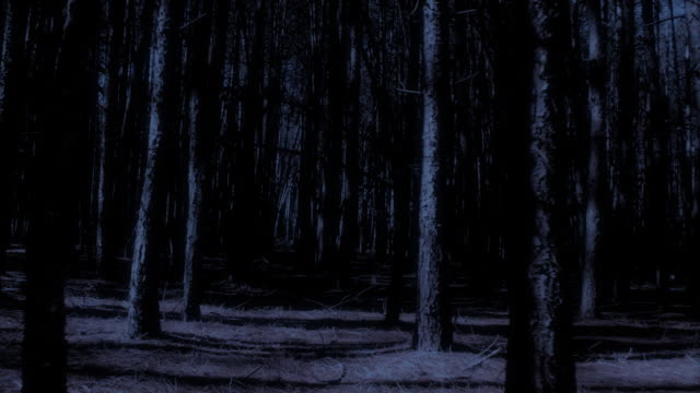 Spooky dark woods