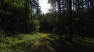 Di foresta 4 k
