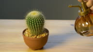 4K : Spraying Cactus