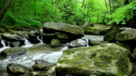 Spring and rocks. Nature background