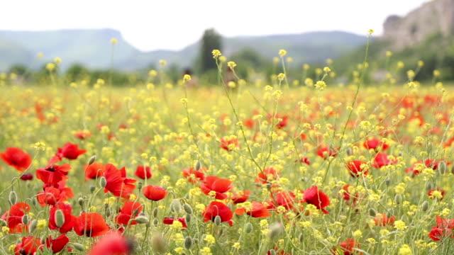 Frühling blühenden valley