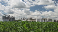 Spring Cornfield with Ethanol Plant in the Background