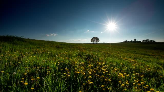 CRANE UP: Spring Field